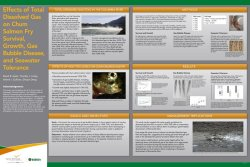 Effects of total dissolved gas on chum salmon