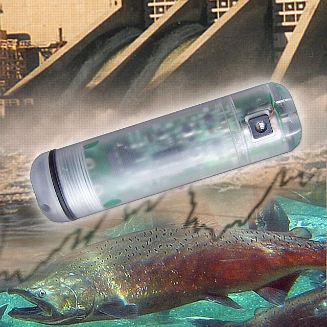 Sensor_fish_poster